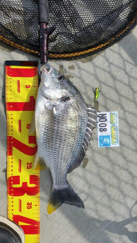 黒鯛ダービー2020