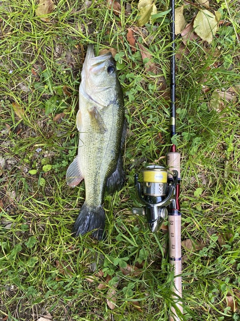 今週の釣り情報