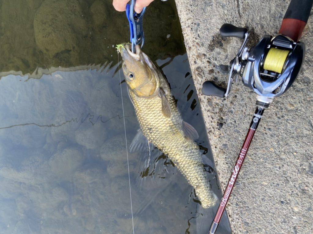 【釣果】淡水のルアー釣り