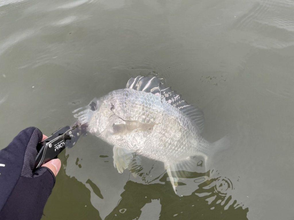 【釣果】奥浜名湖デイチニング