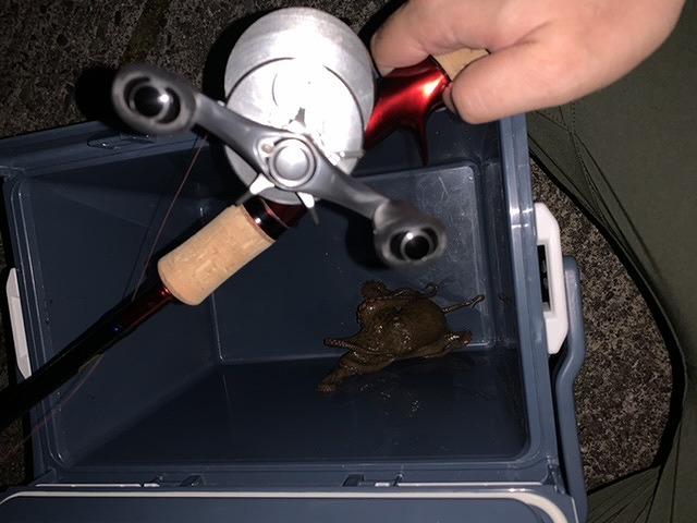【スタッフ釣果】タコ釣れてます