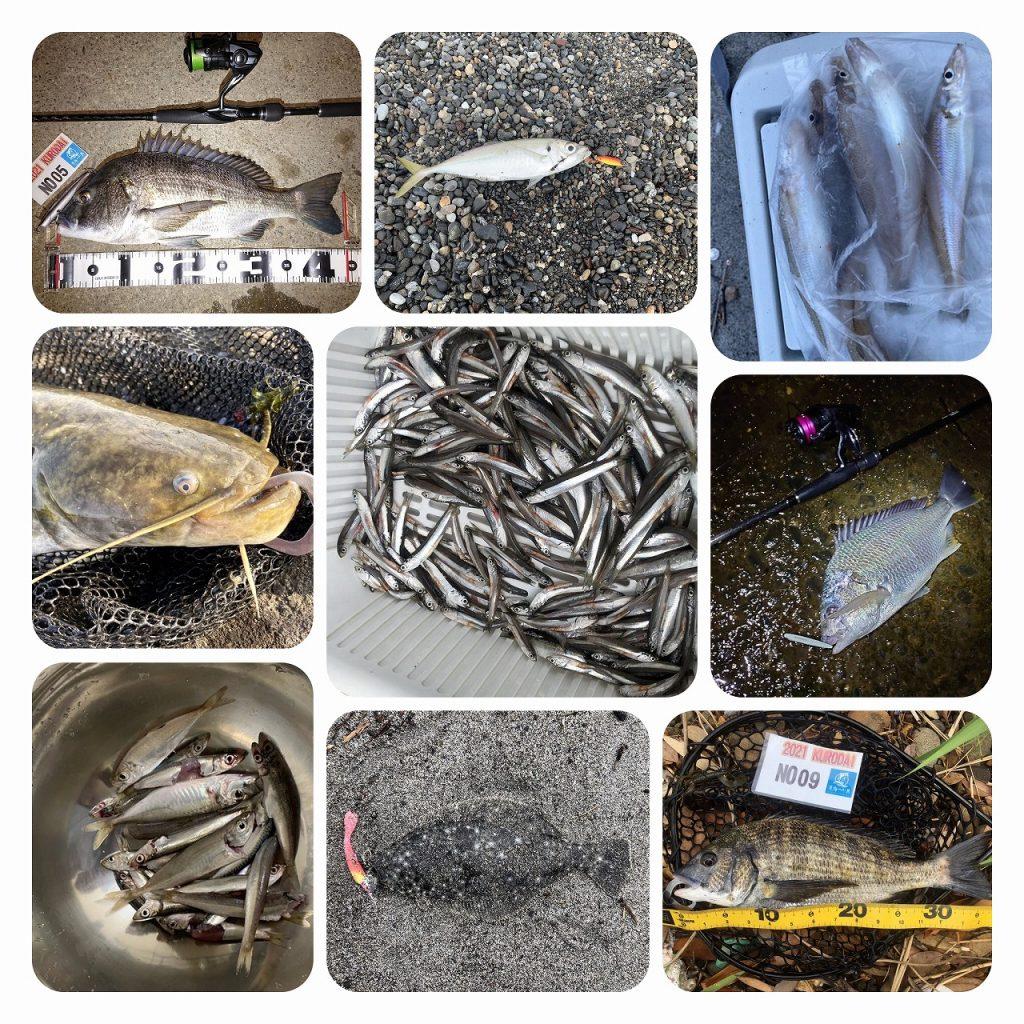 今週の釣果情報