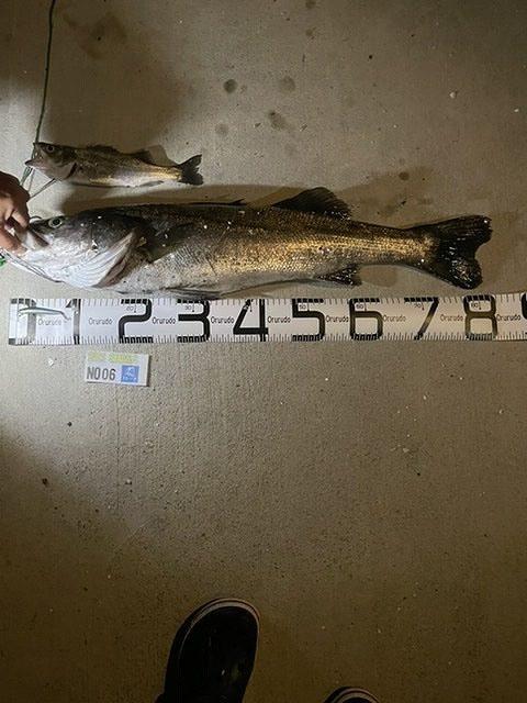シーバスダービー 83cm