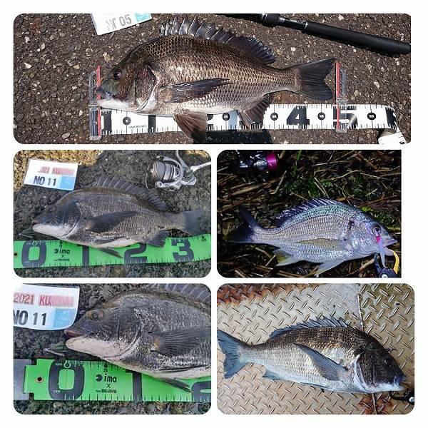今週の釣り情報 20210715