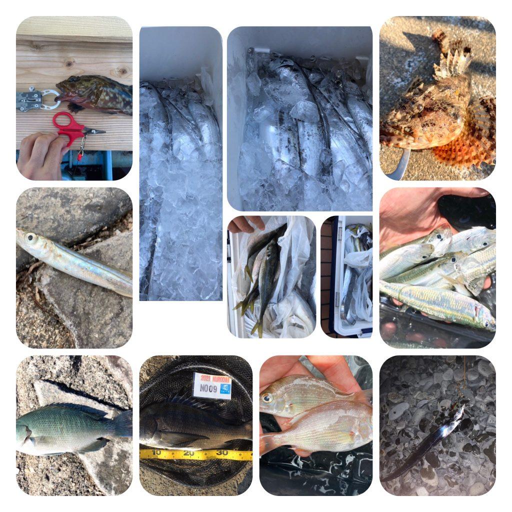 今週の釣り情報 20210729