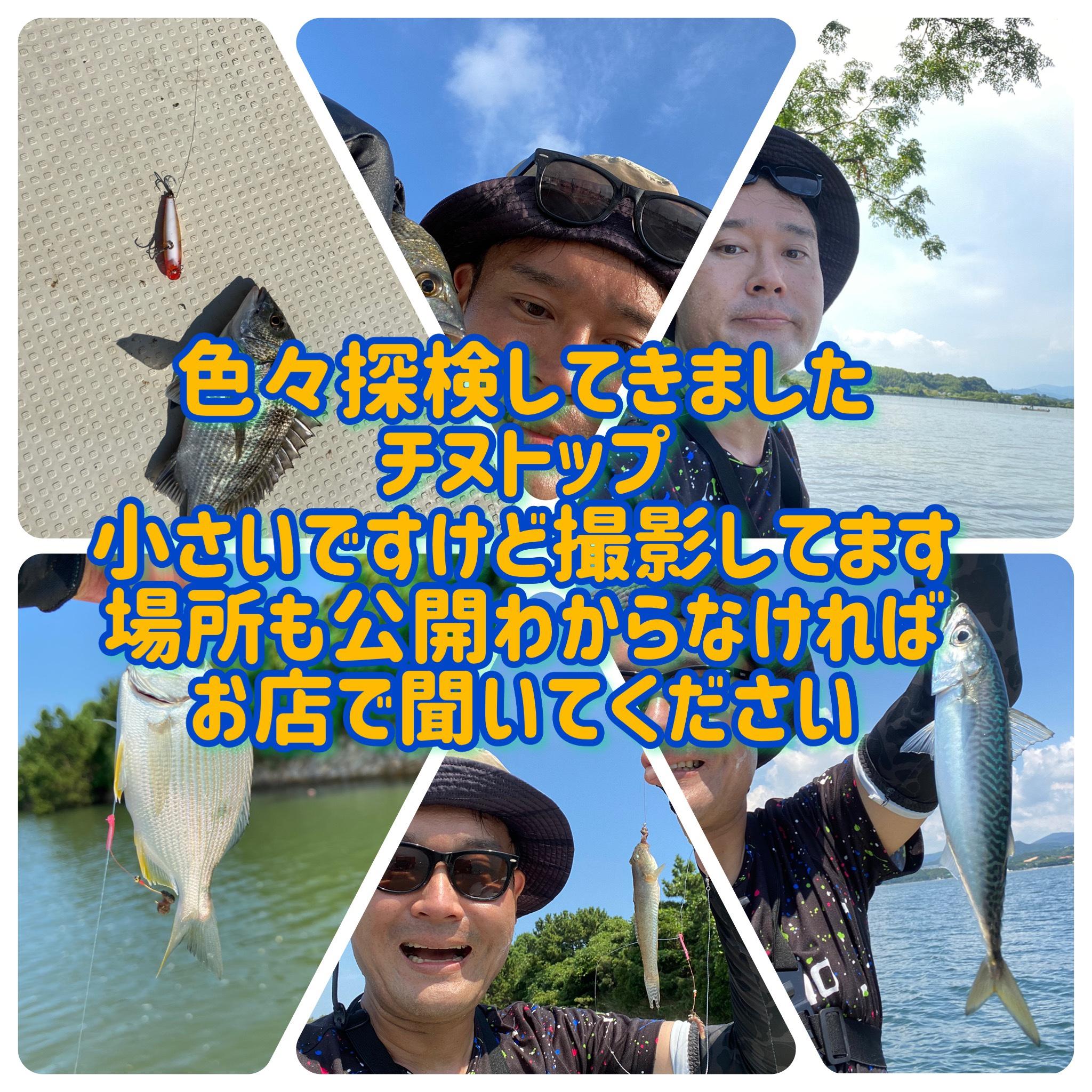 浜名湖チヌトップ ハゼ 青物ライトジギング 安田の浜名湖調査