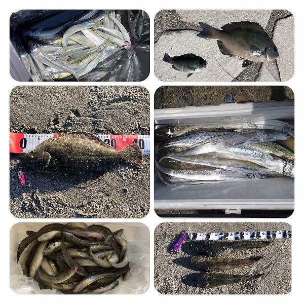 今週の釣果情報 20210909