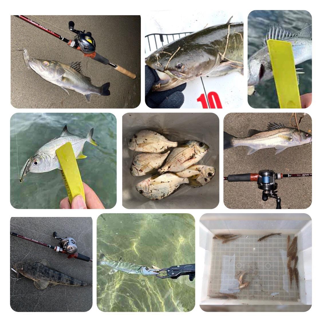 今週の釣果情報 20211014